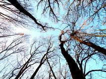 Голубое небо в лесе между ветвями стоковые фото