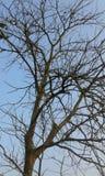 Голубое небо для стоковая фотография