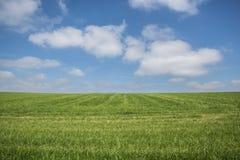 Голубое небо, зеленая трава, белые облака стоковые изображения rf
