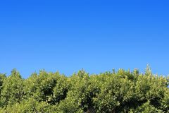 голубое небо зеленого цвета листва вниз стоковые фото