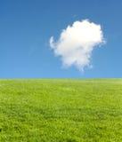 голубое небо зеленого цвета поля стоковая фотография rf