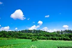 голубое небо зеленого цвета травы вниз Стоковые Фотографии RF