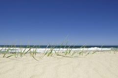 голубое небо зеленого цвета травы Стоковые Изображения RF