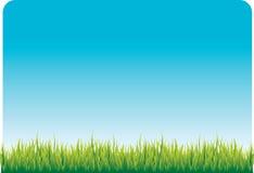 голубое небо зеленого цвета травы иллюстрация вектора