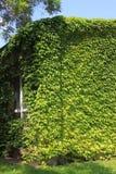 голубое небо зеленой дома eco Стоковое фото RF