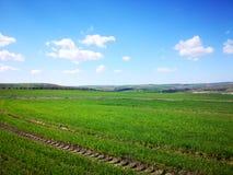 Голубое небо, красивое облако и поле травы, время весны стоковые фотографии rf