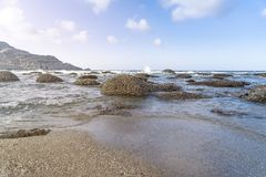 голубое небо ладоней океана ландшафта Стоковые Фото