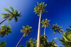 голубое небо ладоней Стоковое фото RF