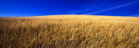 голубое небо лужка стоковые фотографии rf