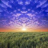 голубое небо лужка Стоковое фото RF
