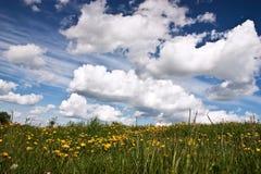 голубое небо лужка fowers Стоковое Изображение