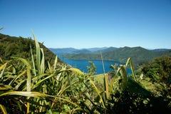 голубое небо моря bush Стоковые Изображения