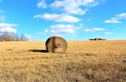 Голубое небо над полем сена Стоковое Фото