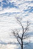 голубое небо облака крупного плана синь предпосылки красивейшая заволакивает небо Драматическое небо с бурным Стоковые Изображения RF