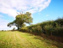 Голубое небо, поле и изгородь стоковая фотография