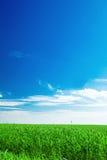 голубое небо поля Стоковое Изображение RF