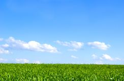 голубое небо поля стоковая фотография rf