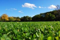 голубое небо сада пущи падения вниз стоковое фото