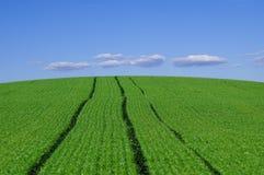 голубое небо сельскохозяйствення угодье Стоковое фото RF