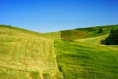 голубое небо сена Стоковые Изображения