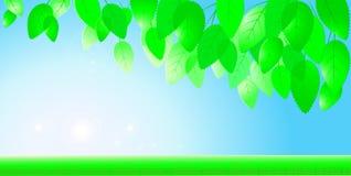 Голубое небо, солнце и ветвь с листьями Стоковое Изображение RF