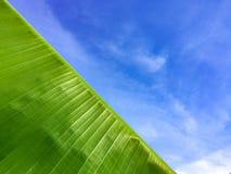 Голубое небо с зеленым цветом лист банана стоковое фото rf