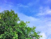 Голубое небо с зеленым цветом лист на дереве стоковое фото