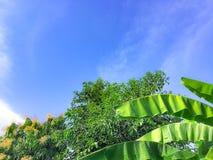 Голубое небо с зеленым цветом лист на contry стороне стоковое изображение