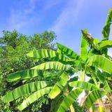 Голубое небо с зеленым цветом лист на contry стороне стоковые фото