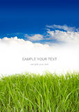 голубое небо травы вниз Стоковые Фото