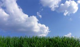 голубое небо травы поля вниз Стоковая Фотография RF