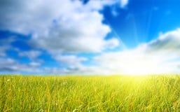 голубое небо травы поля Стоковая Фотография