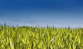 голубое небо травы Стоковые Изображения