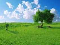голубое небо травы Стоковое Изображение RF
