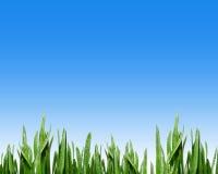 голубое небо травы Стоковое Изображение