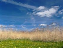 голубое небо травы Стоковые Фотографии RF