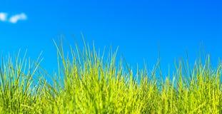 голубое небо травы Стоковое фото RF