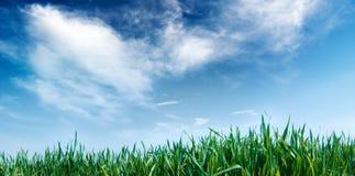 голубое небо травы Стоковое Фото