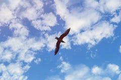 голубое небо чайки летания Высота в облаках Свобода стоковые фотографии rf