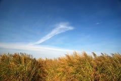 голубое небо bulrush стоковые фотографии rf