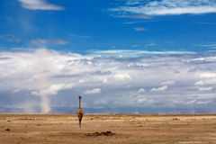 голубое небо giraffe вниз Стоковое Фото