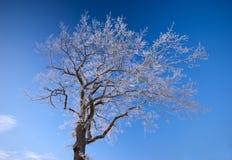голубое небо hoarfrost стоковые фото