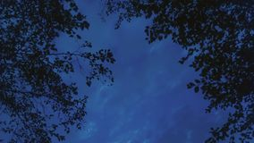 Голубое ночное небо в лесе Стоковые Изображения RF