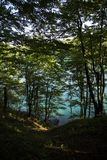 Голубое озеро и дерево Стоковое Фото