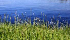 голубое озеро травы высокорослое Стоковые Фотографии RF