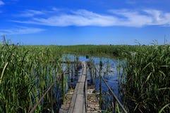 голубое озеро reeds топь неба Стоковая Фотография