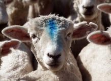 голубое ощупывание Стоковые Фотографии RF