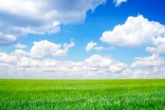 голубое пасмурное небо зеленого цвета поля Стоковая Фотография