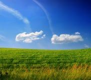 голубое пасмурное небо зеленого цвета травы поля Стоковое Изображение