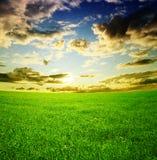 голубое пасмурное небо зеленого цвета травы поля Стоковое фото RF